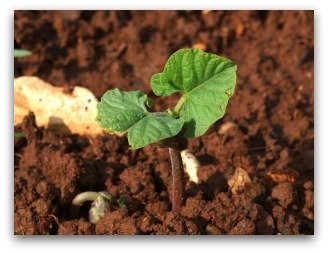 healthy soil is important part of planning a vegetable garden