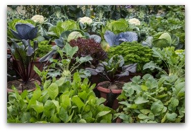 colorful vegetable container garden example