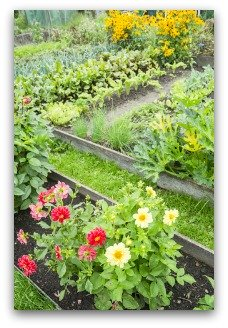 beautiful raised bed garden with zinnias for color