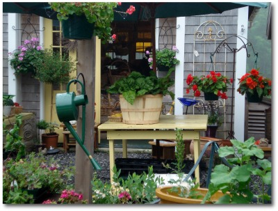 colorful patio container garden