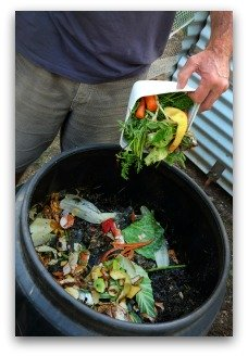 Ingredients For Organic Fertilizer Using Compost