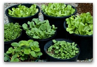 container vegetable garden example