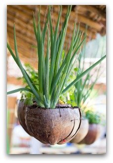 herb container garden ideas