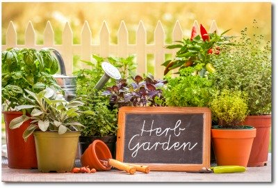 Container herb garden idea