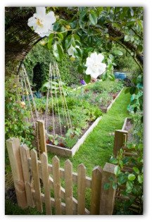 beautiful garden with wooden fence