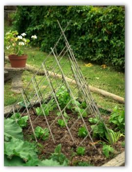 garden trellis used as design feature