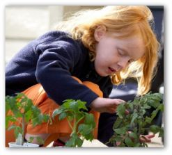 small child helping in the garden