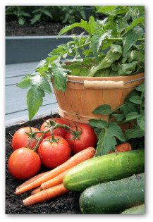 vegetable gardening ebook