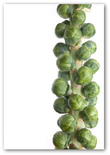 fresh brussel sprout stalk