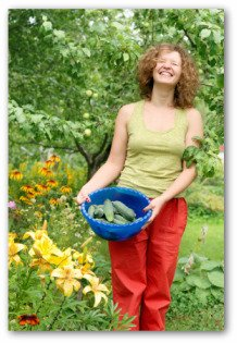 gardener holding cucumbers in a bowl freshly picked from the garden