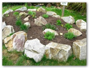 rock garden with rosemary