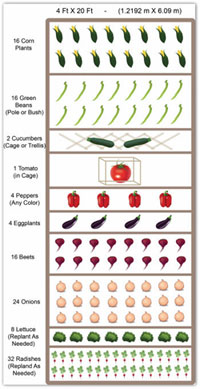 free sample 4' by 20' vegetable garden plan