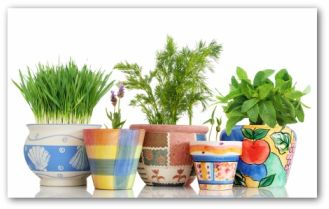 indoor herbs planted in colorful pots