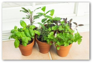 Indoor vegetable garden planning tips and ideas - Growing vegetables indoors practical tips ...
