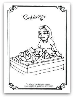 Free Cauliflower Coloring Page Printable