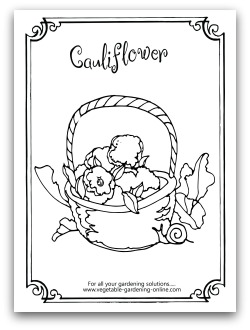 Cauliflower Coloring Page Printable