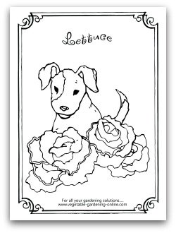 lettuce printable coloring page