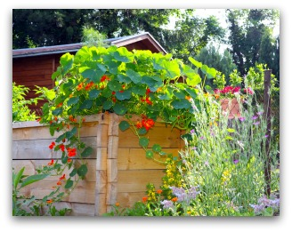 Raised Vegetable Gardens Can Be Any Height You Want