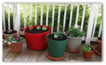 vegetables and flowers planted in pots in a patio vegetable garden