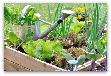 small space raised bed vegetable garden example