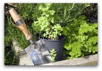 sage, parsley, oregano raised bed herb garden