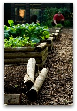 raised bed beginner vegetable garden