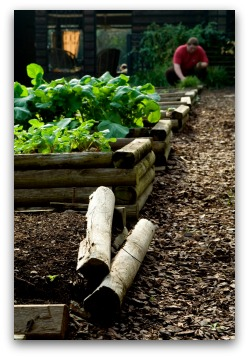 above ground vegetable garden plans