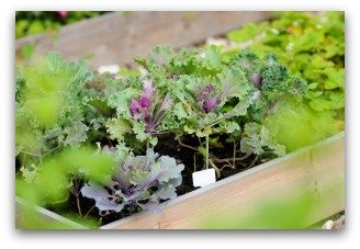 rotate garden vegetable crops each year