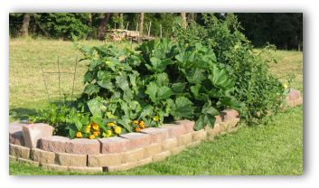 raised vegetable garden bed with vegetables planted in it