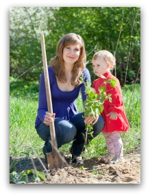 planting berry bushes