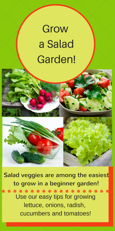 salad veggies vegetable garden idea