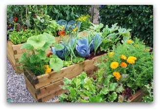 planning a raised bed vegetable garden