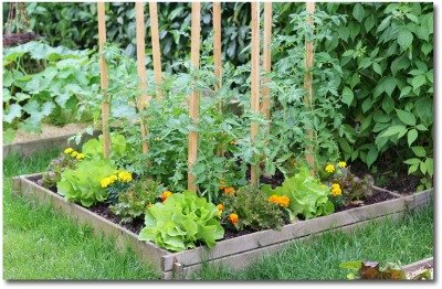 small backyard raised bed vegetable garden