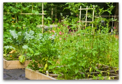 Square Foot Gardens Examples Part 83