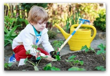 child helping plant strawberries in garden