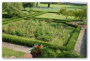 using a hedge as a vegetable garden fencing