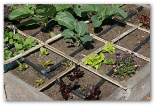 raised bed vegetable garden with irrigation drip system built in