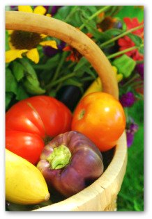 tomatoes, squash, peppers in a basket