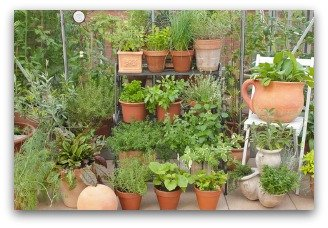 vertical vegetable gardening in containers